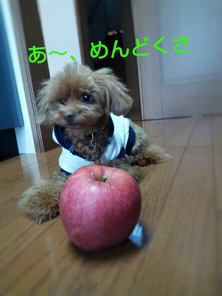 リンゴとぷる
